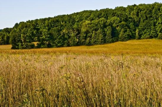 Willowwood Field