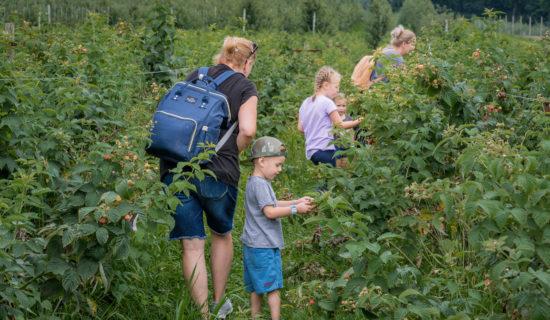 Alsteade Farms, Exterior, Family Picking Berries, 2019, Farm, Web  Recreation Farm, HR, MF,